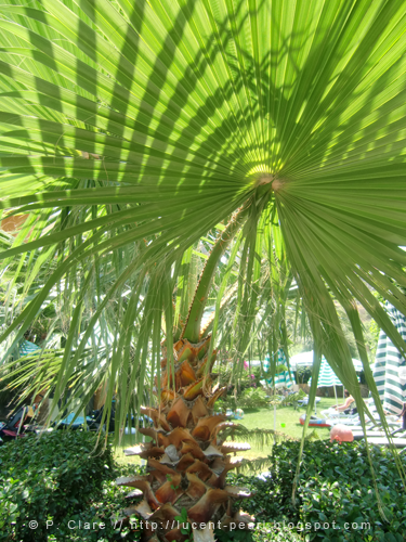 Palme auf dem Weg