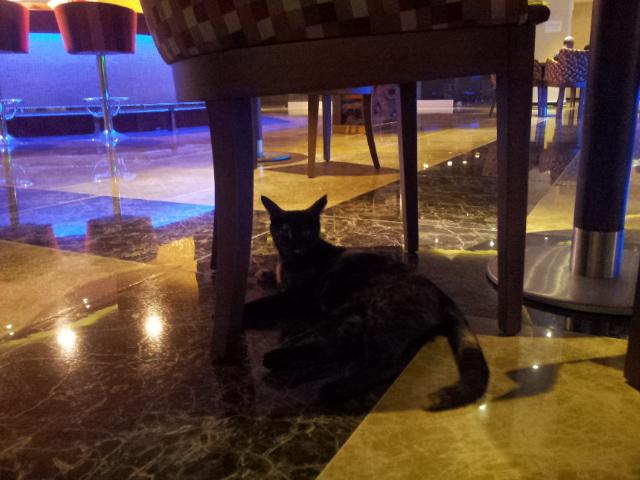Katze in der Lobby