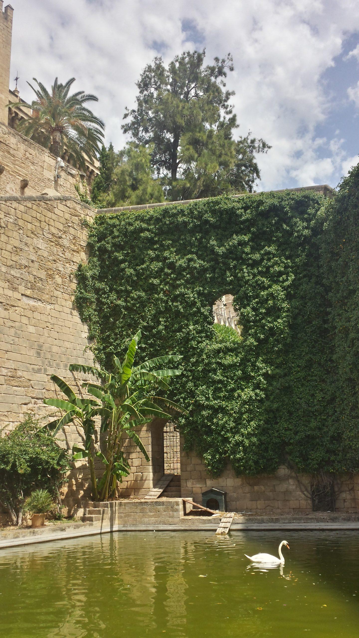 Kleine paradisische Ecke in Palma de Mallorca